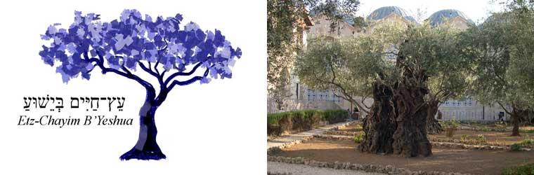 Logo-olivetree-760x250